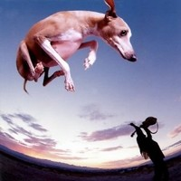 PAUL-GILBERT_Flying-Dog